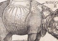 An historical sketch of a rhinoceros.
