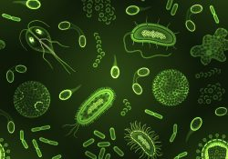Bacteria virus and germs microorganism cells green inversion seamless pattern vector illustration
