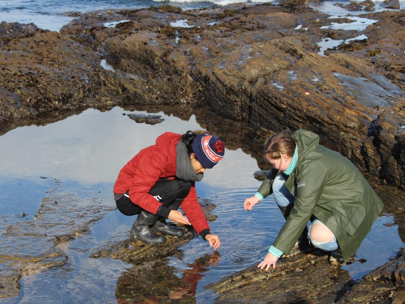 Two students in rain gear collect samples from a rocky beach pool.