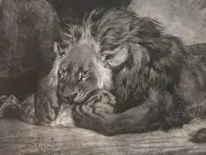 "Detail from ""Lion de l'Atlas,"" 1829. Lithograph. By Eugéne Delacroix."