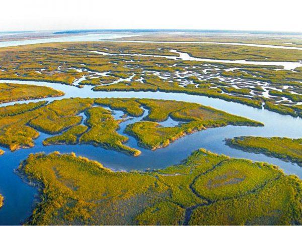 Image for Sophia Schmidt '17: Climate Change Affects Coastal Wetlands' Carbon Absorption