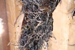 Oakley Center: Original Seagrass Insulation