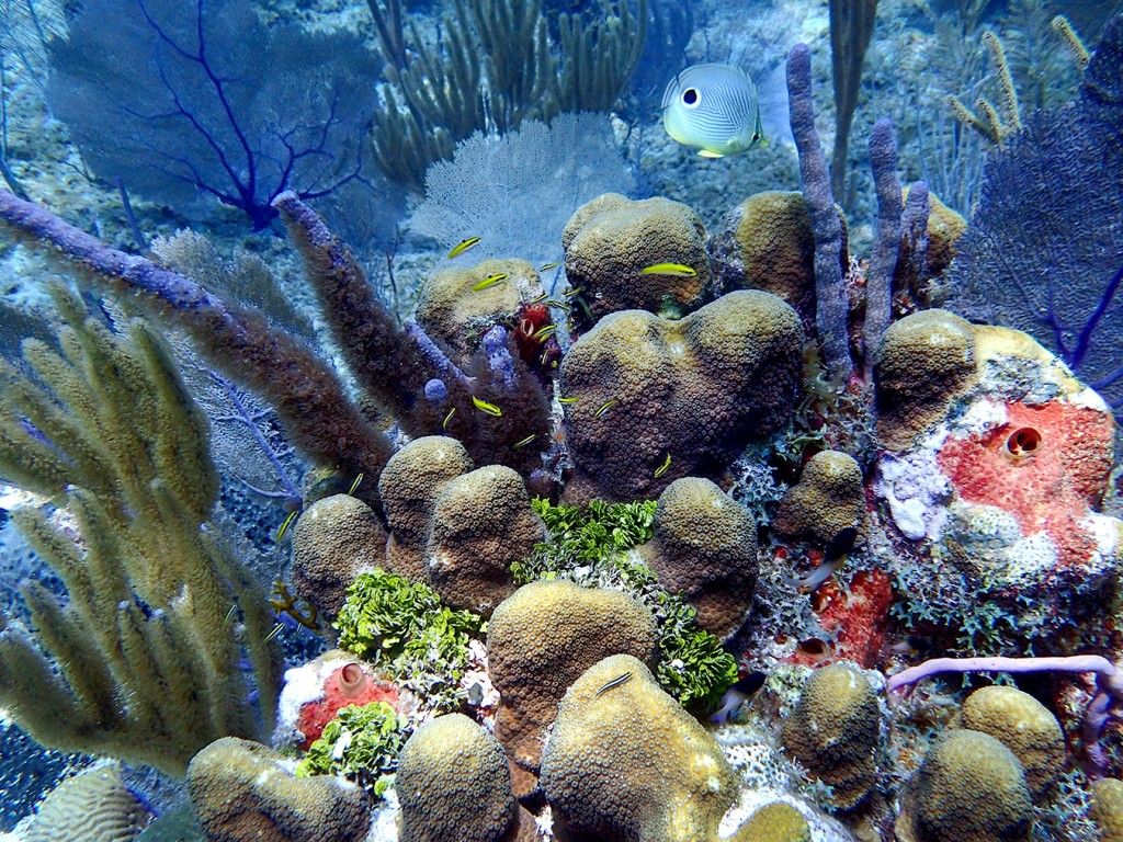 a study of coral reefs Gravity of human impacts mediates coral reef conservation gains prof josh cinner led a massive study of nearly 1,800 tropical coral reefs around alongside other key ecological impacts of climate change, the best available science suggests that coral reefs would decline by 70-90 percent with.