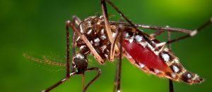 Image for Ending Dengue Fever